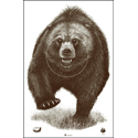 Alaska State Parks Bear Target - ALL WEATHER RESISTANT TARGET ON HEAVY PAPER